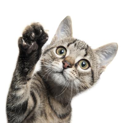 Katzen und ihr Schnurrbart | Beaphar Deutschland -